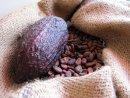 Kakaové máslo (Cocoa butter)
